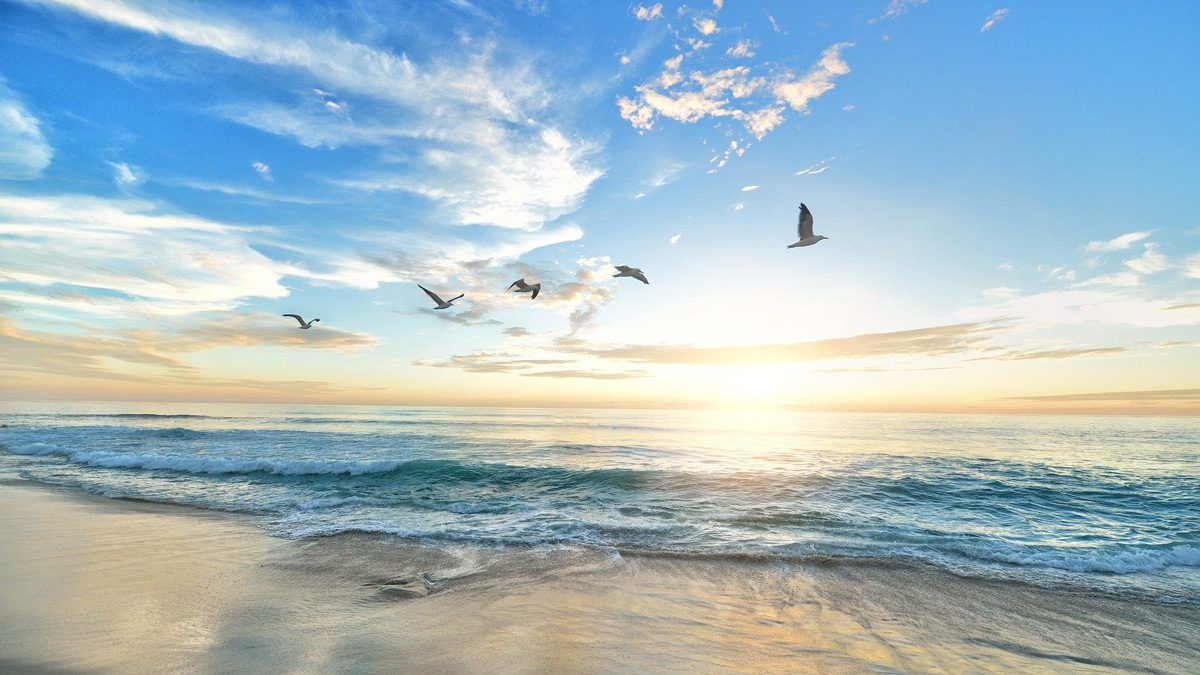 Chicago Reiki - ocean shore during the day with birds flying overhead