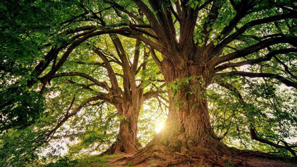 Jerry Mikutis Blog - Chicago Reiki - September Reiki -trees with the sun streaming through the branches