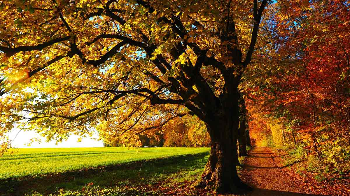 Jerry Mikutis Chicago Reiki and Astrology Photo of a tree in early autumn with the leaves starting to change. Autumn Equinox 2021