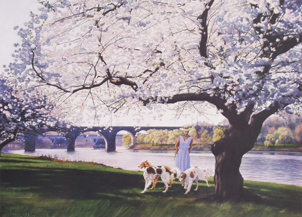 Cherry Blossoms by Jamie Cavaliere