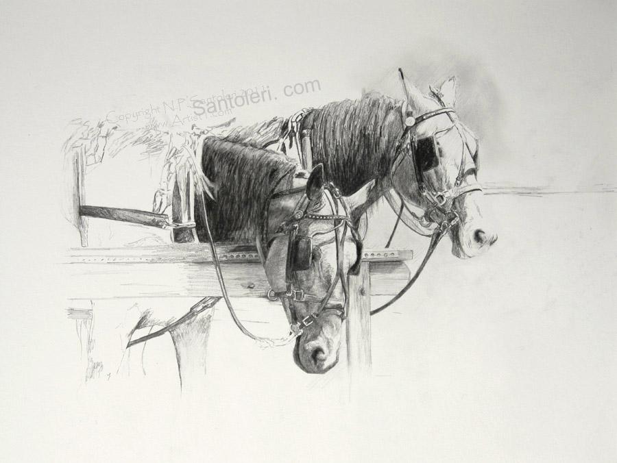 Amish Horses open edition Pencil Print by Santoleri