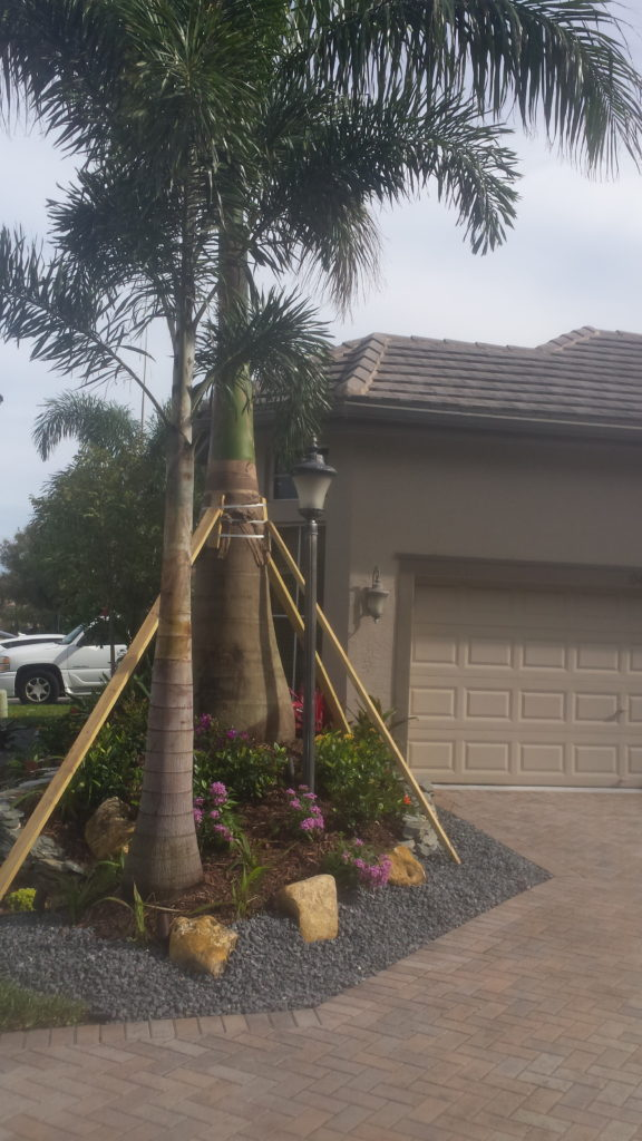 In this photo the Royal Palm tree that was installed was elevated in the bed area to add an additional dimension to the look.  The boulders, flagstone and ground stone also were installed to add contrast to highlight the dimension and accent against the driveway.