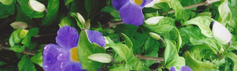 purple-flower-1