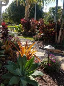 Agave Attenuata with Crotons & Ti Plants in backdrop