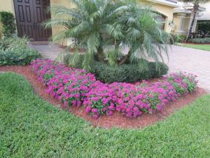 Penta Flowers (Purple)