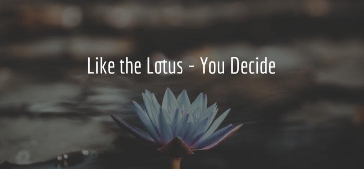 Like The Lotus, You Decide
