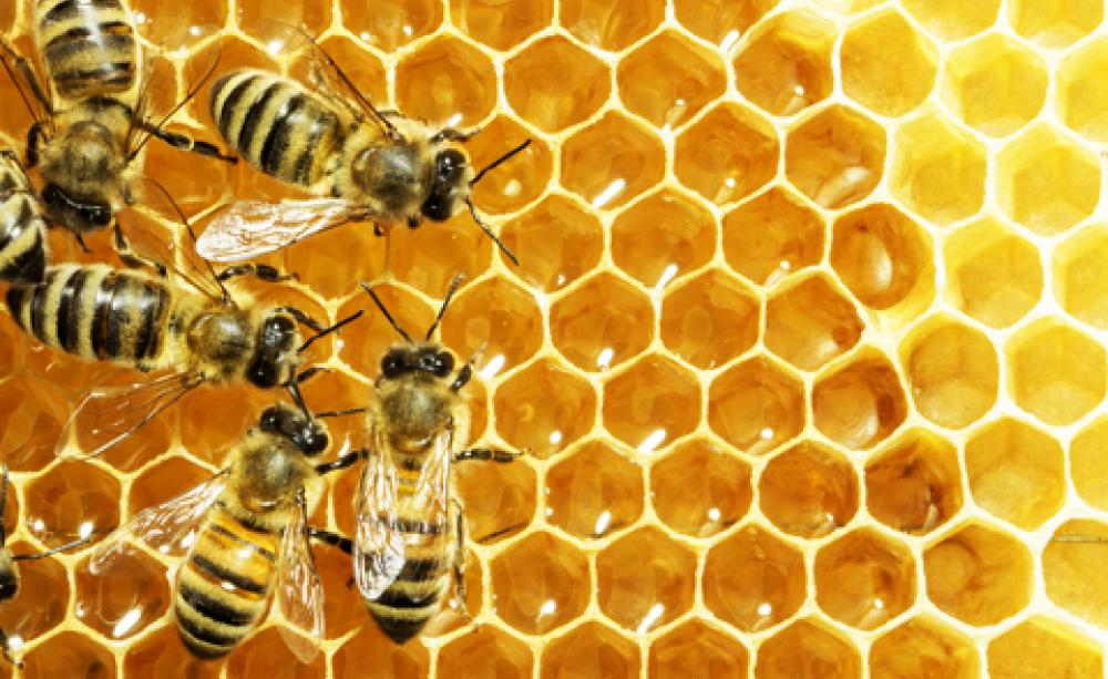 Buzz off Beeswax