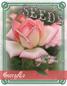 Image of a flower seed packet with a pink rose and a promo message for Eilee's music making, © 2020 L. Eilee S. George