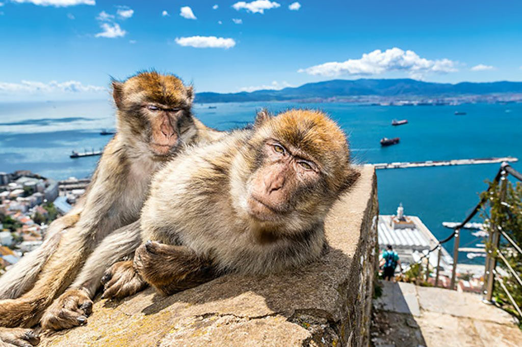 Boat Trips to Gibraltar
