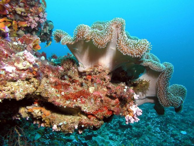 Amazing diving sites in the Maldives to explore