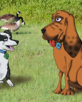 Rex the Rescue Pup Book