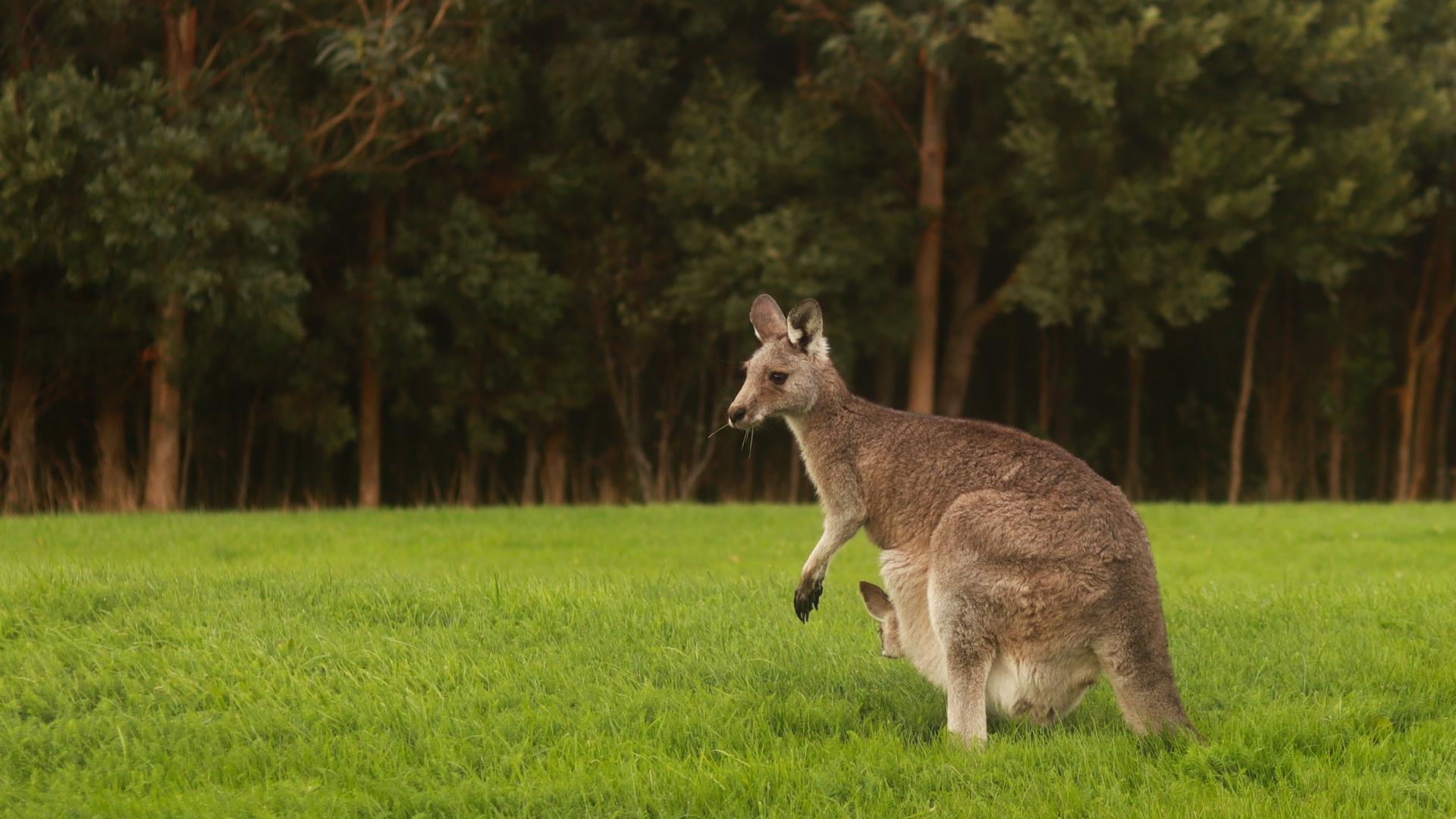 Studio Garden View of Kangaroo