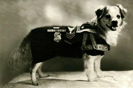 USS Iowa dog