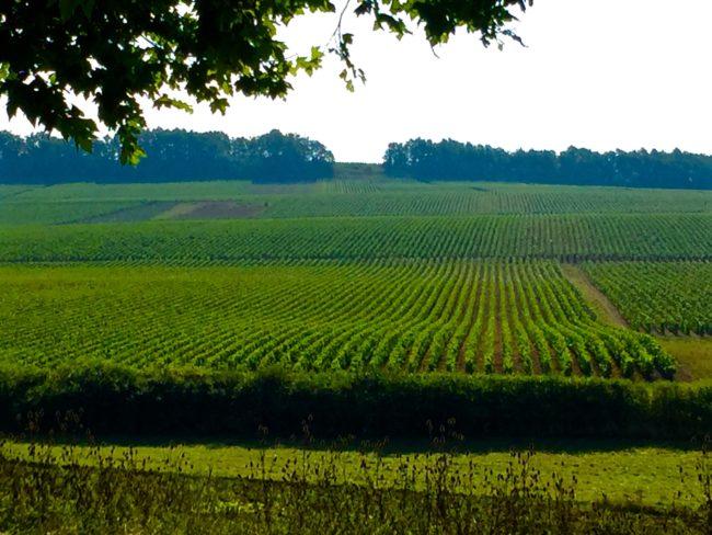 chablis-vineyards-2