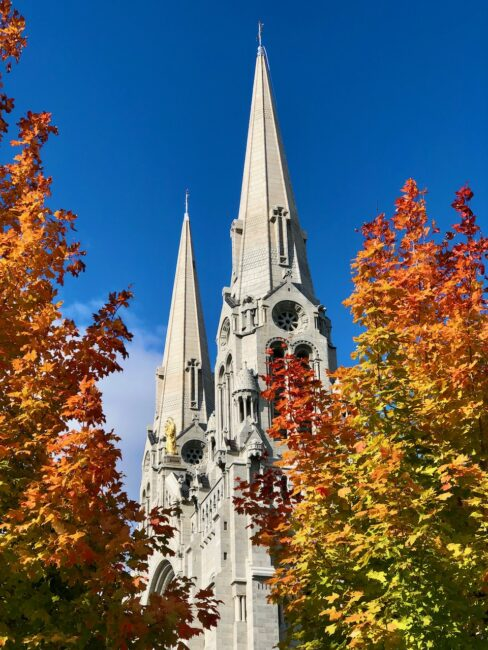 sugar maple trees in front of cathedral