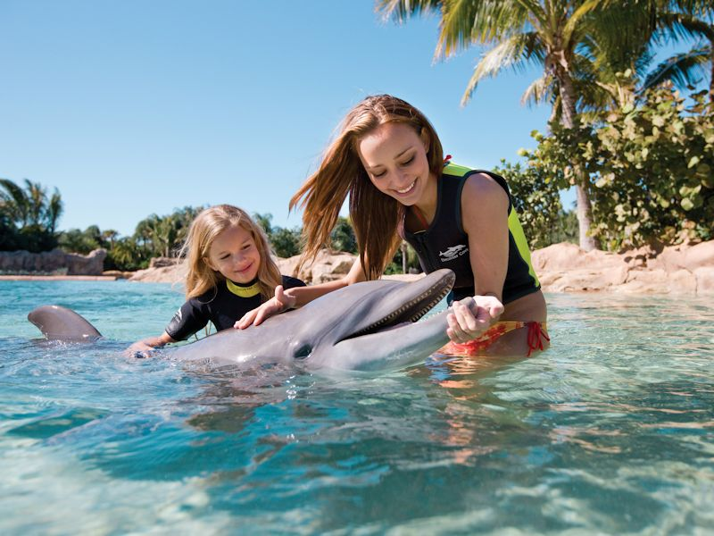 discovery-cove-seaworld-swim-with-dolphins