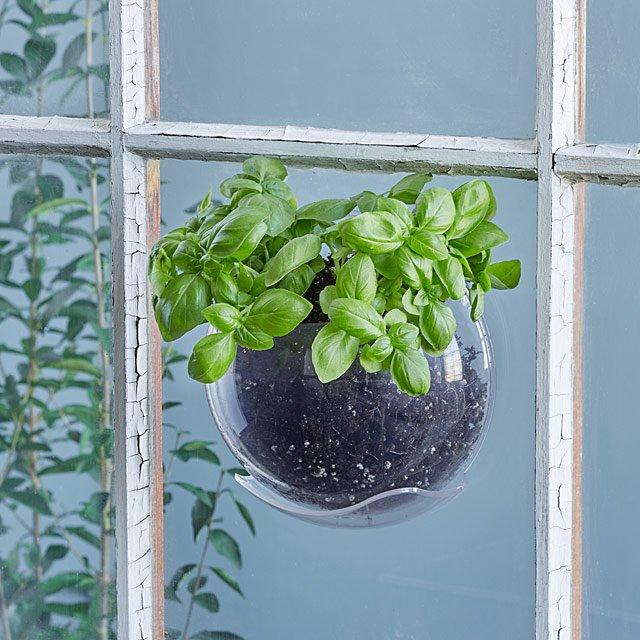 window suction pots