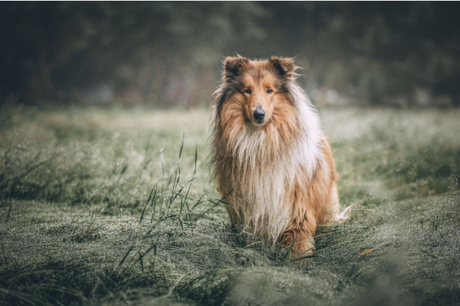 Choosing a dog breed for your family