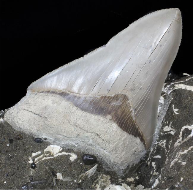 FossilEra