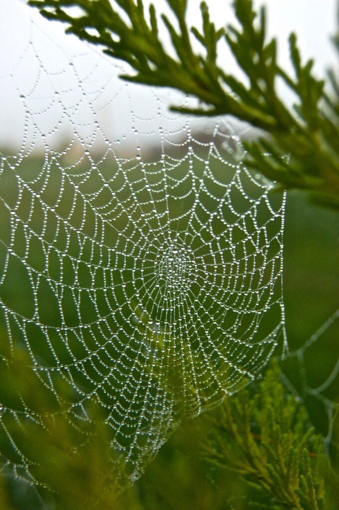 Little web