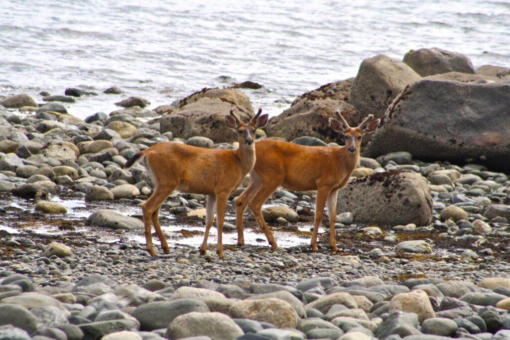 Bucks on the beach