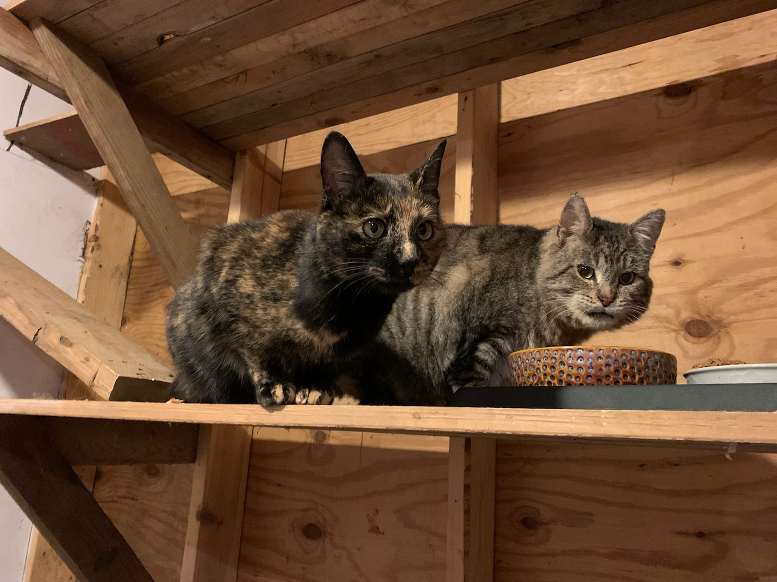 barn cats crouching over bowl
