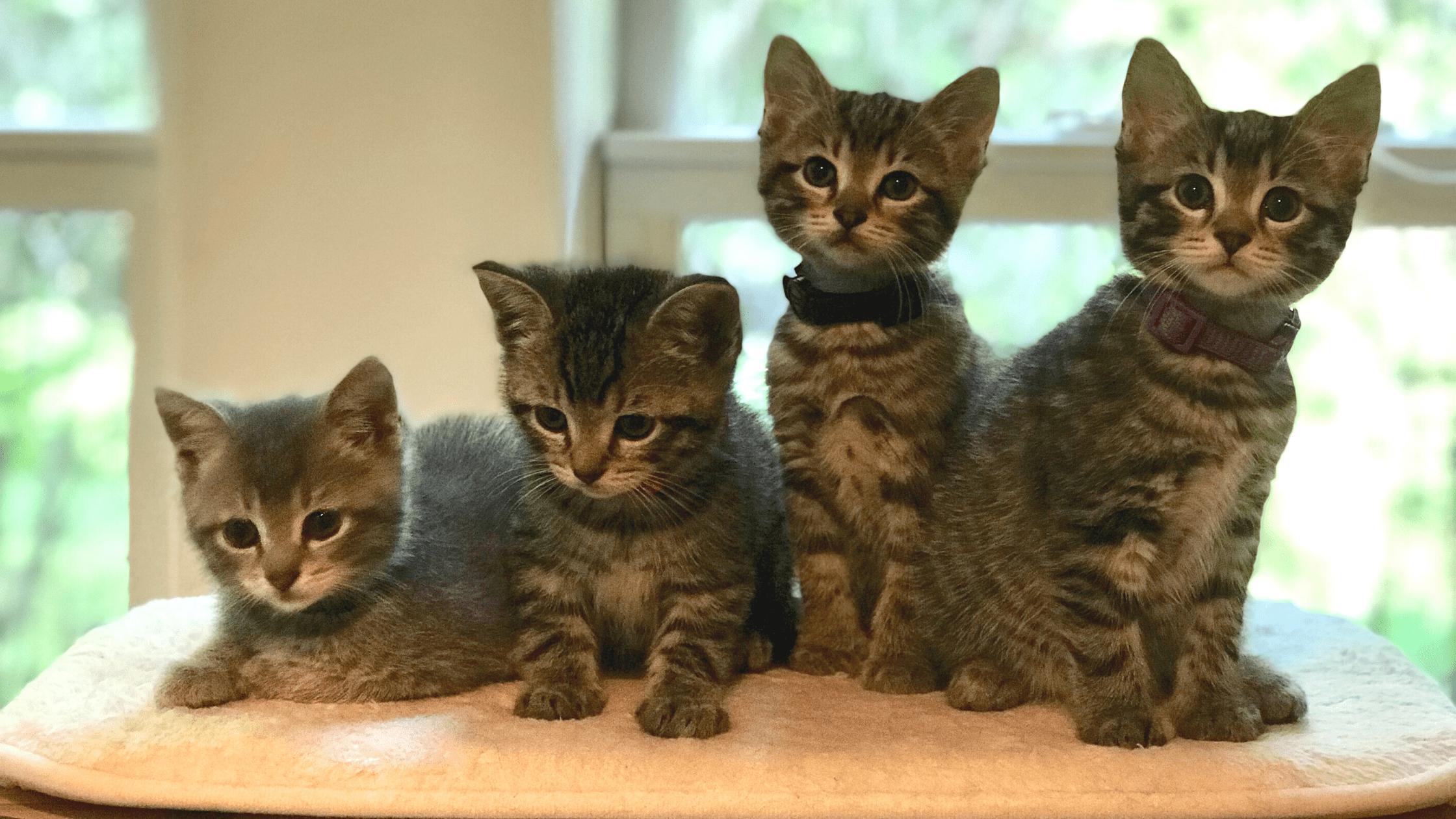 group of kittens