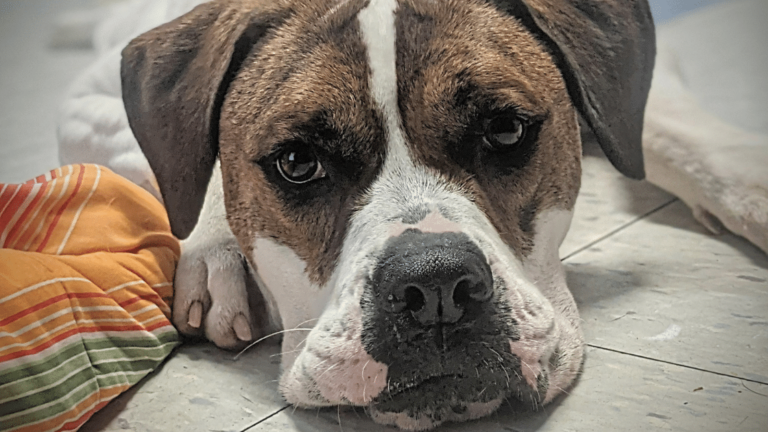 Dog Foster Families Needed!