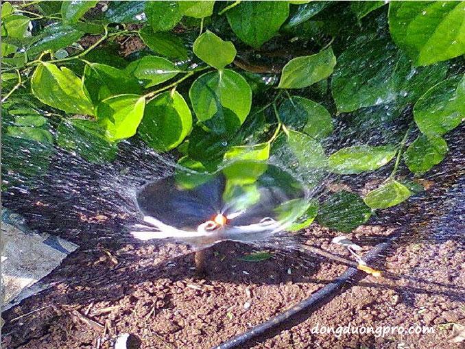 Tính toán hệ thống tưới phun mưa - Tưới lá và gốc cây tán lá thấp