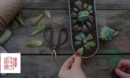 Comment multiplier des plantes succulentes en 5 étapes faciles par Horti-Plus et Passion Jardins