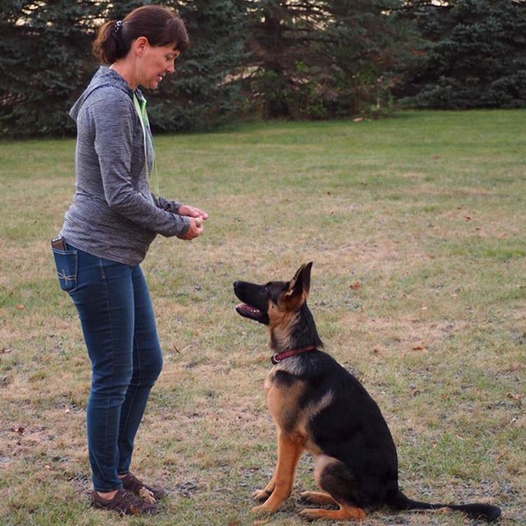 Trained German Shepherd for sale MI von Buchmann