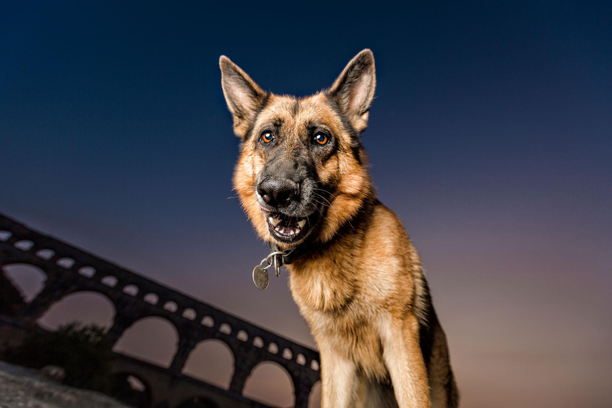NJ Dog Photographer Leslie Leda