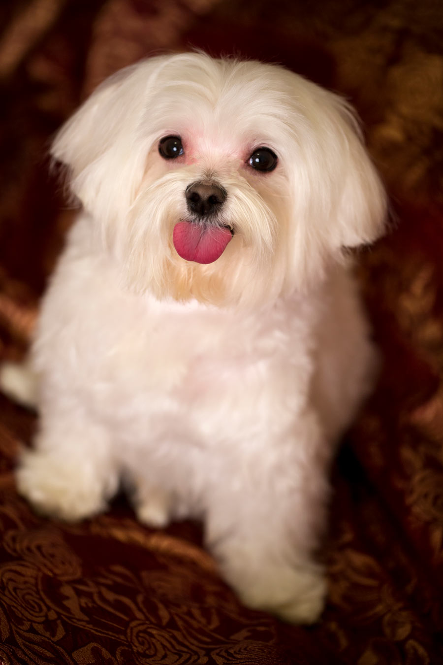 Junior Leslie's Dog - Pet photographer in new york