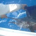 sailfish-1