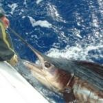 sailfish-photo-3