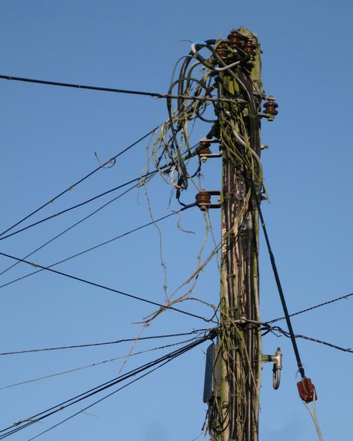 English: Telephone pole, Westwood