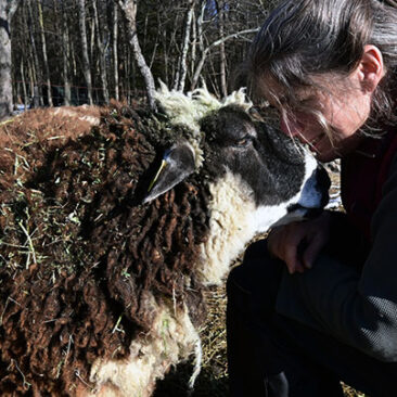 Ingrid and Ima the Sheep
