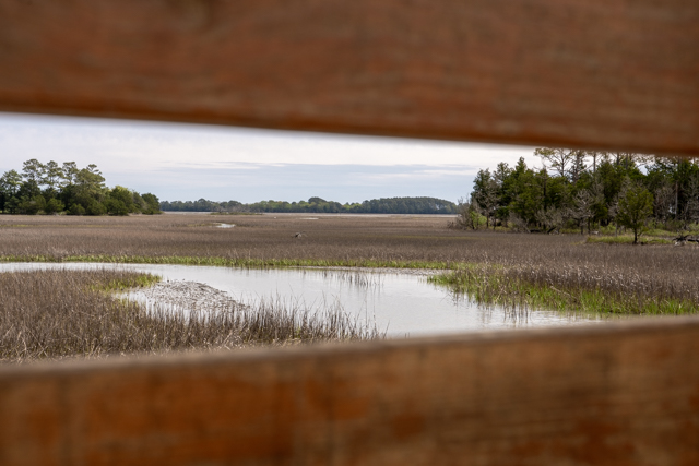 The 1,250 acre Brownsville Preserve is definitely worth a visit!