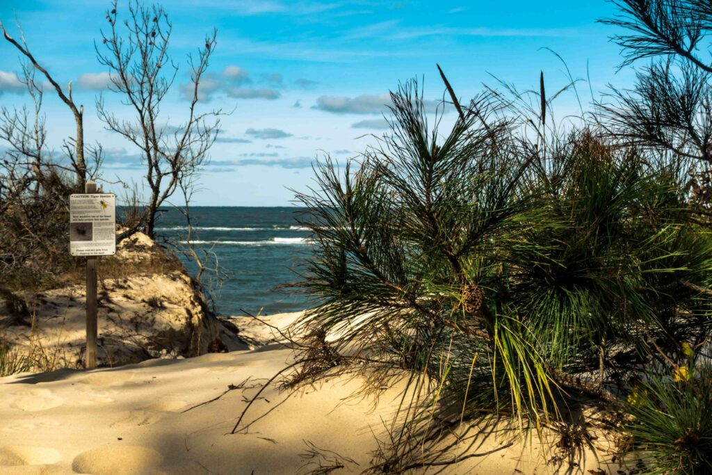 This is the entrance to the beach at the Savage Neck Dunes Natural Area Preserve. We'll leave the beach itself as a surprise…trust us, you won't be disappointed.