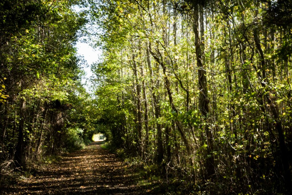 One of many beautiful walking trails at the Savage Neck Dunes Natural Area Preserve.