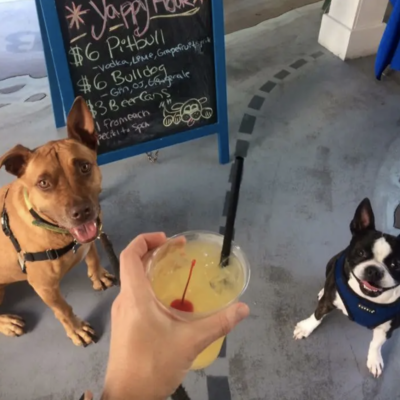 How The Florida Keys SPCA is Helping our Furry Friends Find a Home