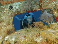 PADI wreck diver image