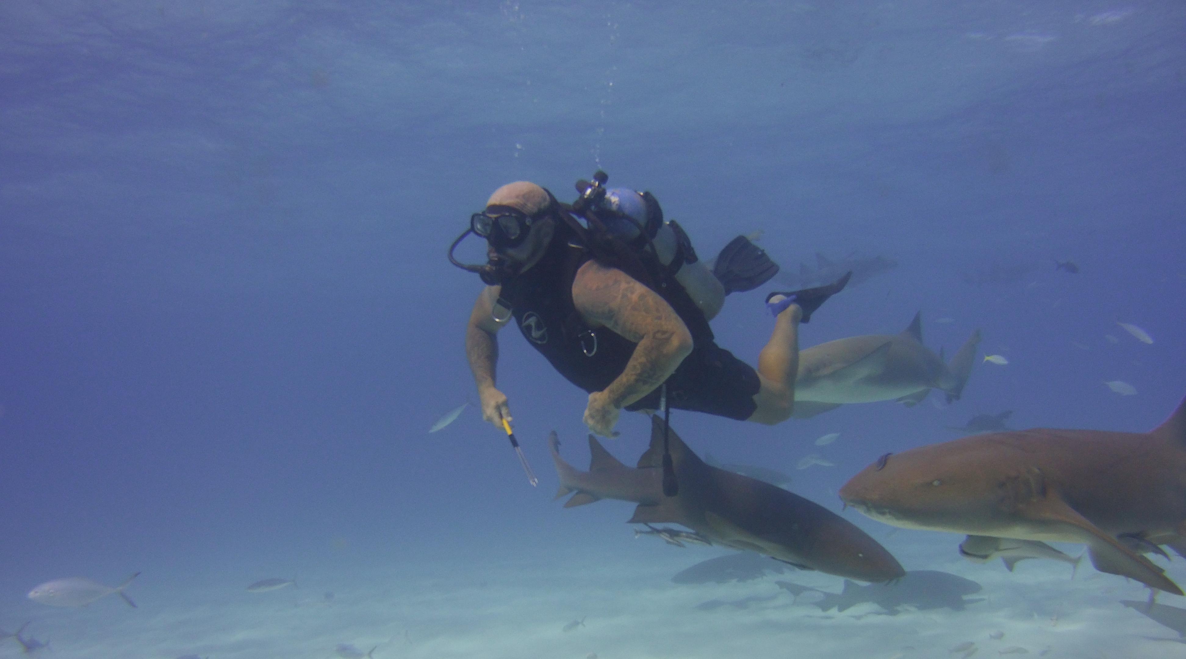 Shark Awareness Dive