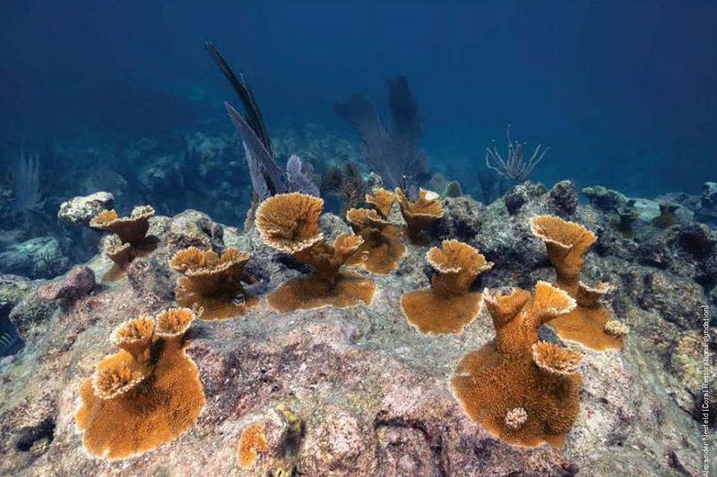 Pickle's Reef