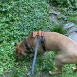 Bohdi on a Walk
