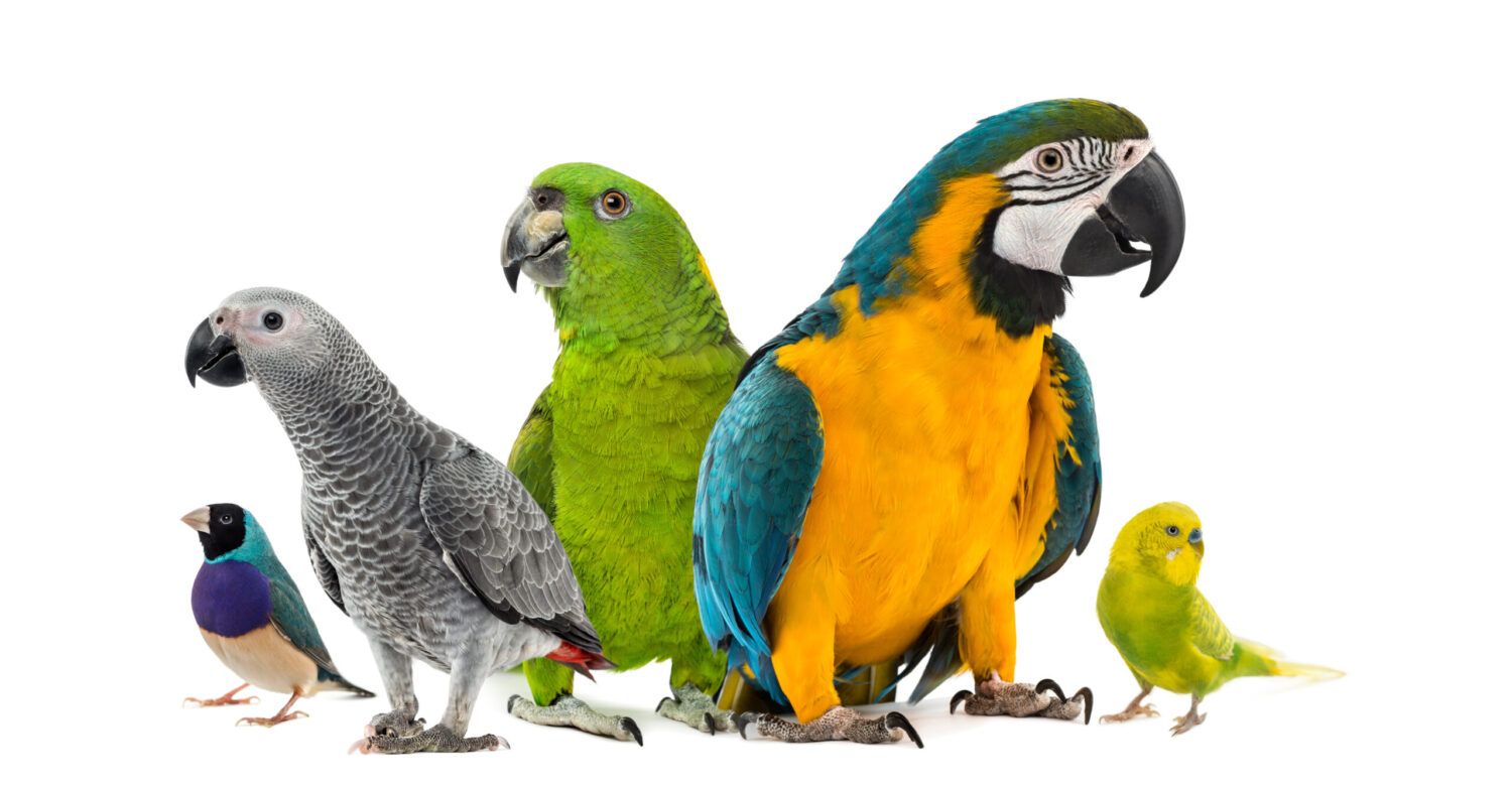 Bird Care from Trained Professionals