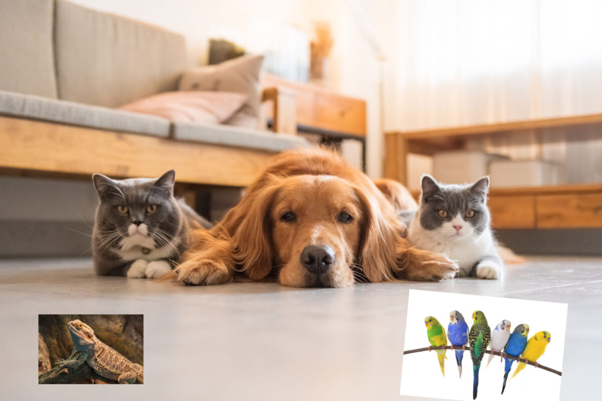 Caring for your whole menagerie from smallest to largest!