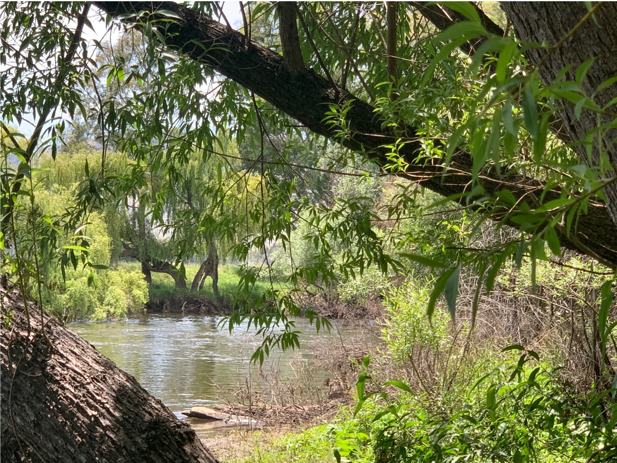 Towong Murray River is seen through a clearing in the trees