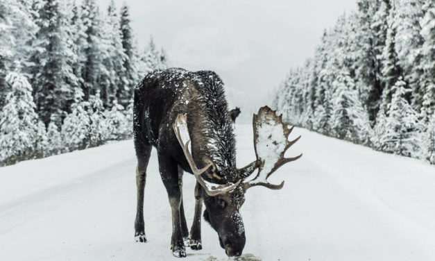 Explore North America on a wild animal expedition