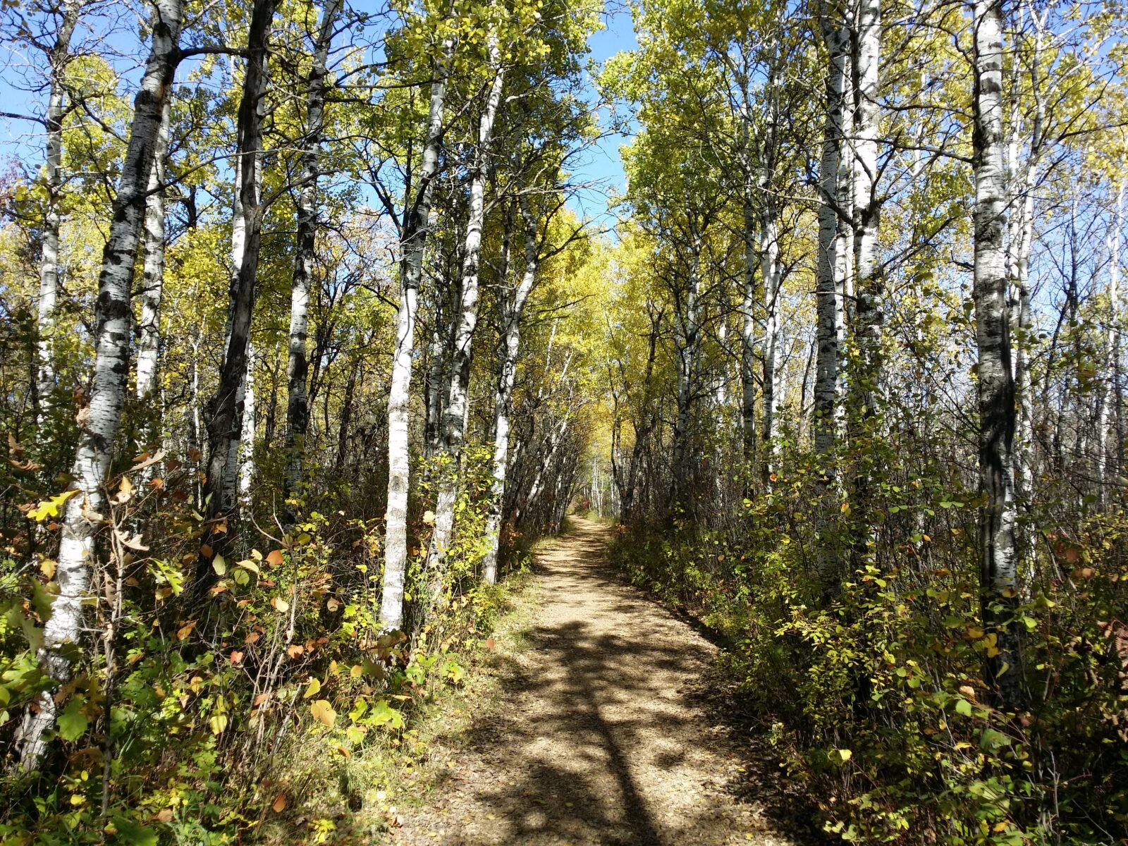 Time to enjoy Assiniboine Forest